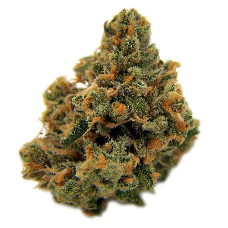 how to find marijuana seeds on ebay